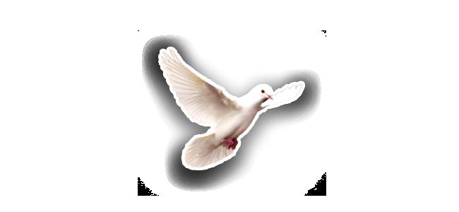 Colombe-esprit-nouveau-priere-meditation